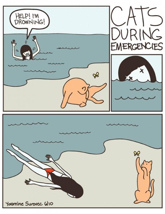 cats during emergencies