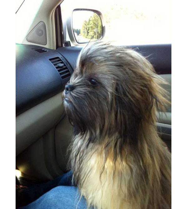 Chewbacca Hunde