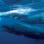 Wale auf Wanderung