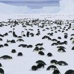 Trauernde Pinguine