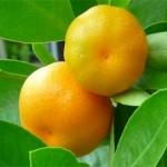 Mandarinenwald