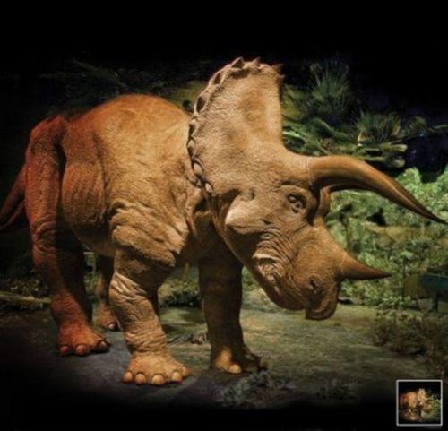 Triceratops animatronisch