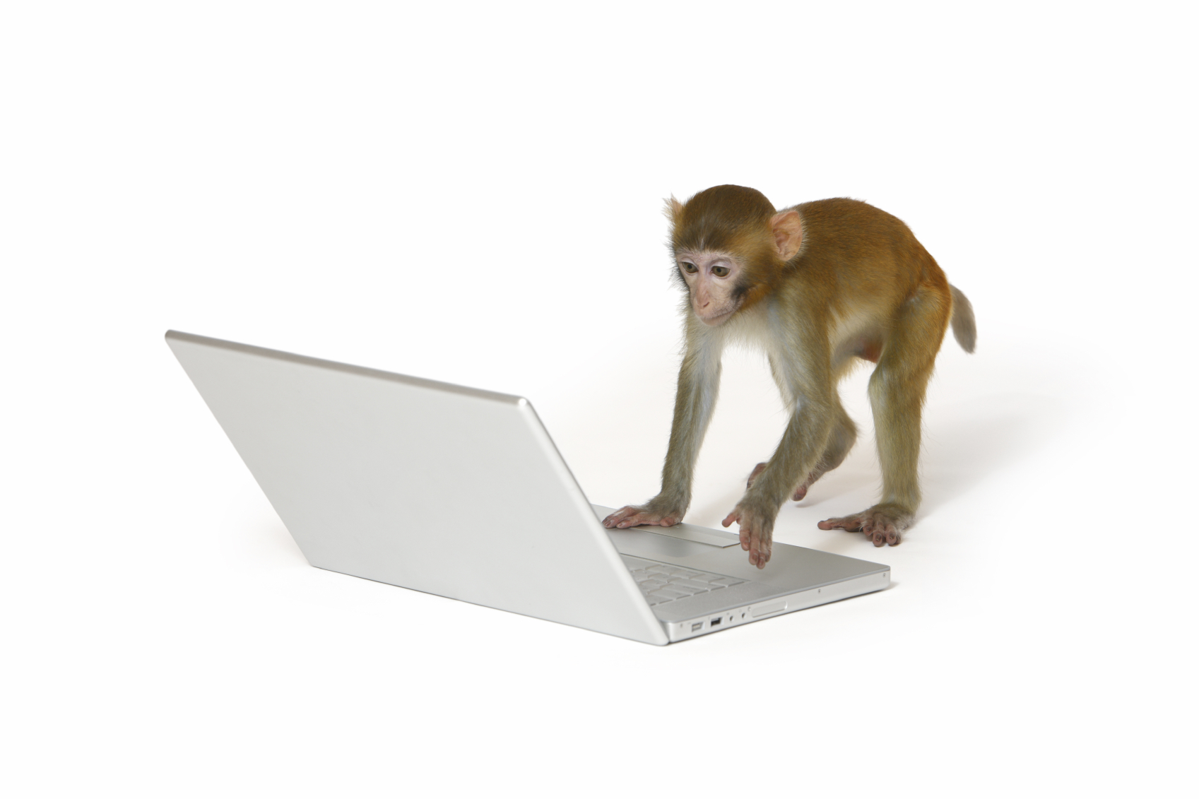 infinite-monkey-theorem.jpg