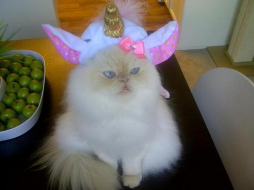 Katzendes Einhorn