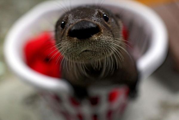Finde einen Namen für diesen kleinen Baby Otter!