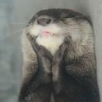 Entzückter Otter
