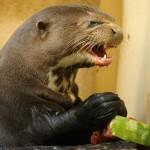 Evil Otter Is Evil