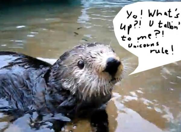 Ein sprechender Otter