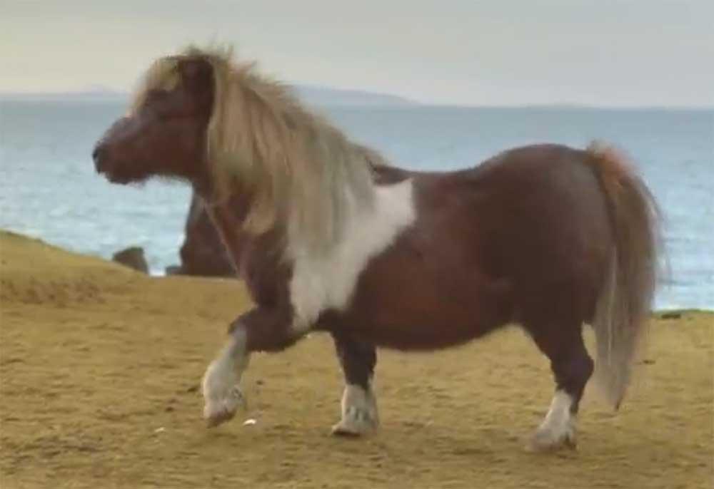ponies haben kurze beine tolle werbung mit tanzendem pony kotzendes einhorn. Black Bedroom Furniture Sets. Home Design Ideas