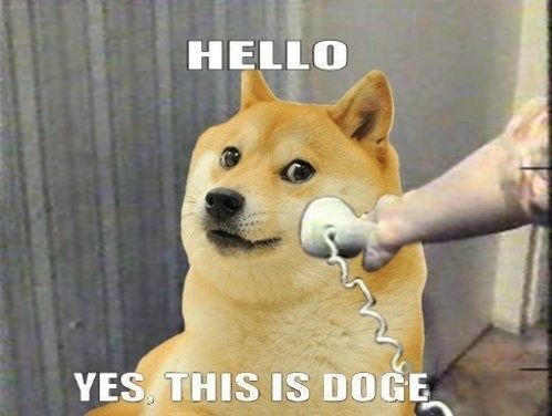 thisisdoge.jpg