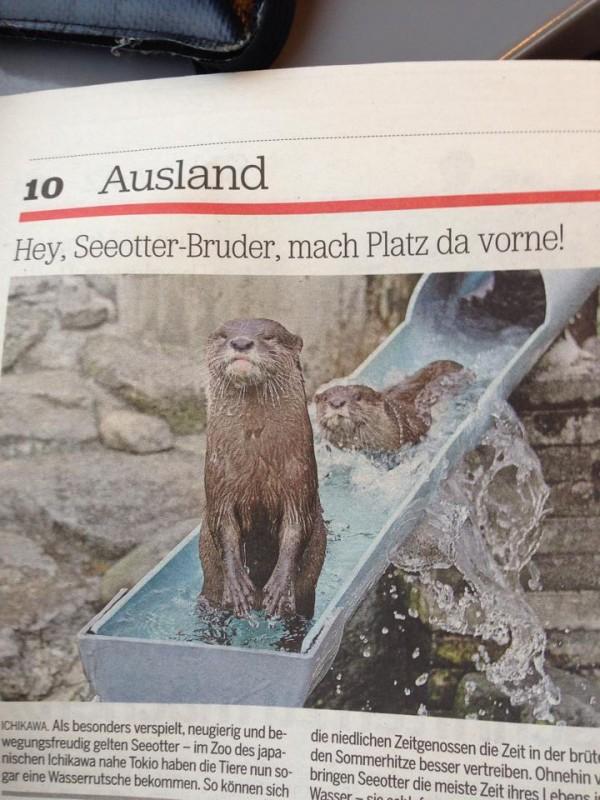 Seeotter-Bruder