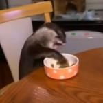 Otter isst