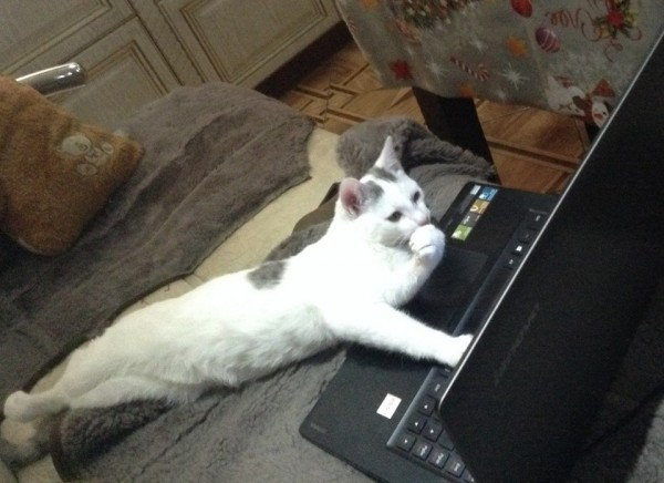 Just a cat surfing teh interwebz