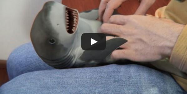 Suprised Bayb Shark