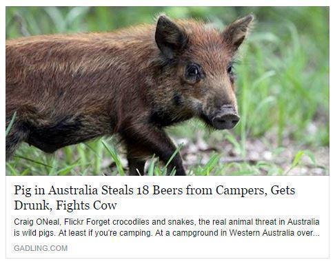 Schweine sind Menschen und/oder umgekehrt...