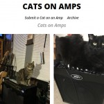 Cats On Amps
