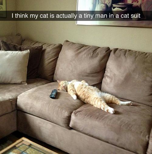 Tiny Man in Cat Suit