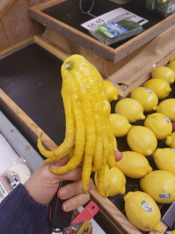 Lemon-Cthulhu