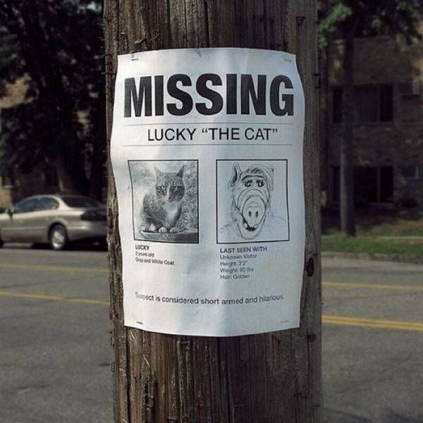 Have you seen Lucky?!