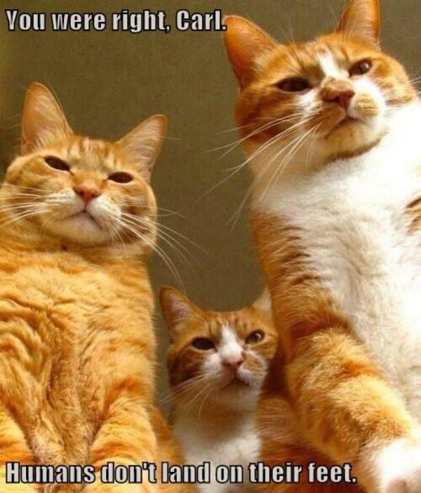 Was Menschen von Katzen unterscheidet: Humans don't land on their feet!